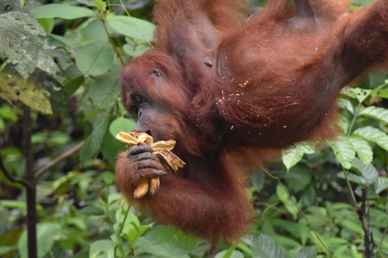 Borneo100006